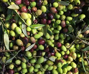 Nostos Restaurant Olives